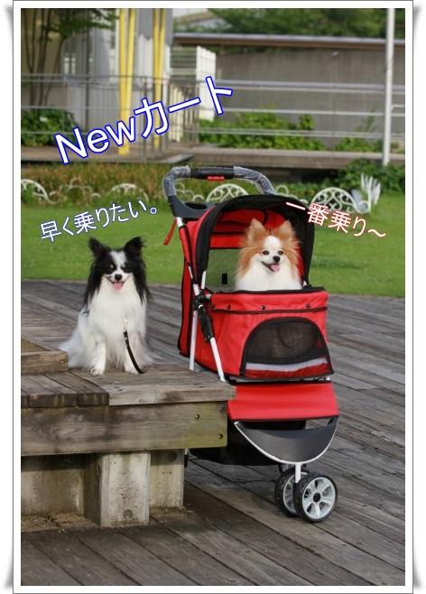 cart00200.jpg