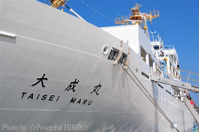 新旧海王丸 W展帆 (4)