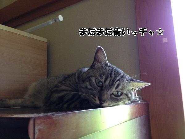 IMG_9201.jpg