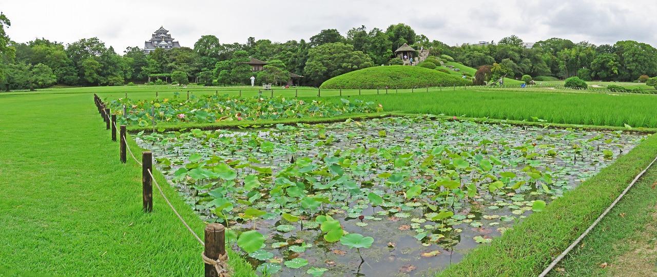s-20150722 後楽園今日の井田の大賀蓮の様子ワイド風景 (1)