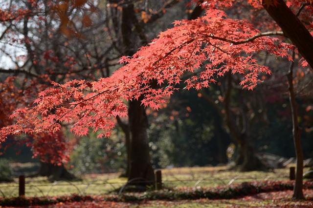 後楽園の紅葉13