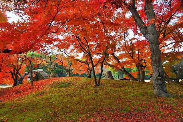 後楽園の紅葉20