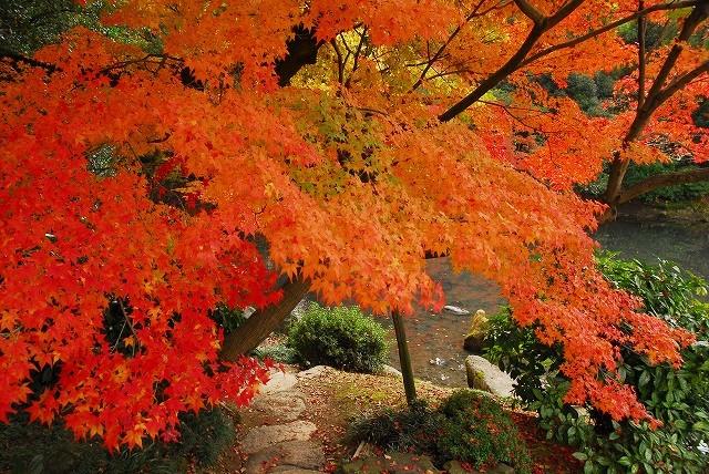 後楽園の紅葉24-2