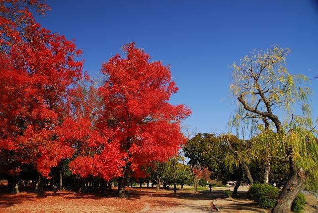 岡山総合グランドの紅葉1