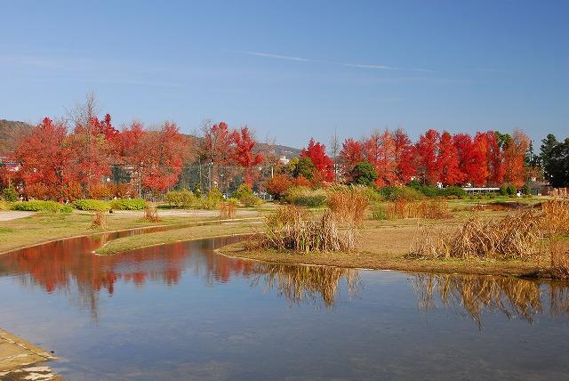 岡山総合グランドの紅葉3