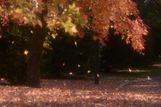 岡山総合グランドの紅葉4