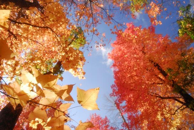 岡山総合グランドの紅葉7