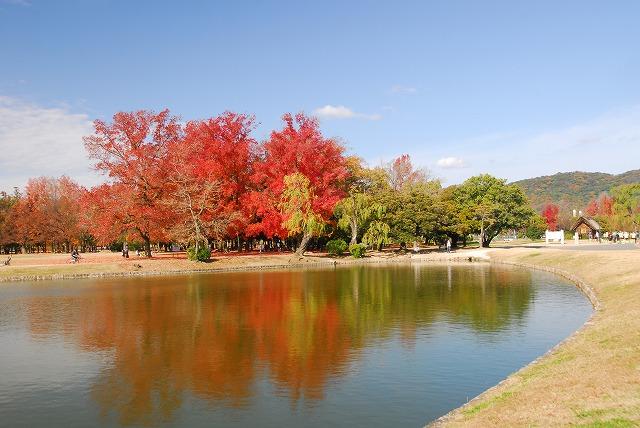 岡山総合グランドの紅葉8