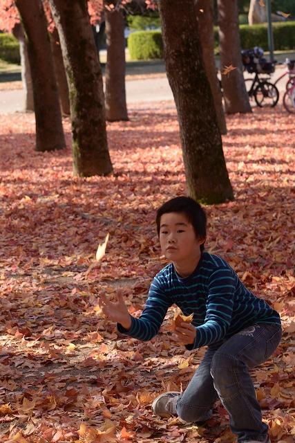 岡山総合グランドの紅葉9