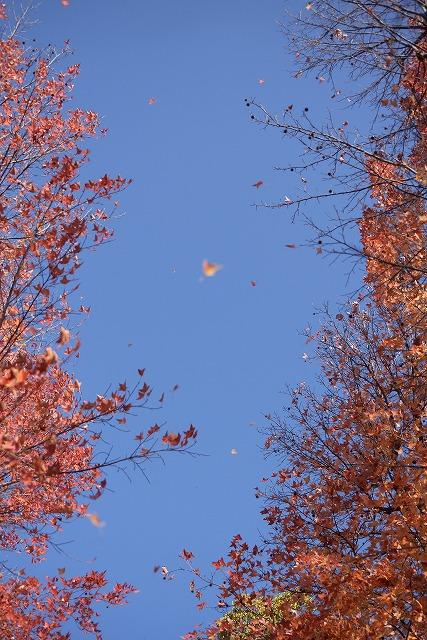 岡山総合グランドの紅葉12
