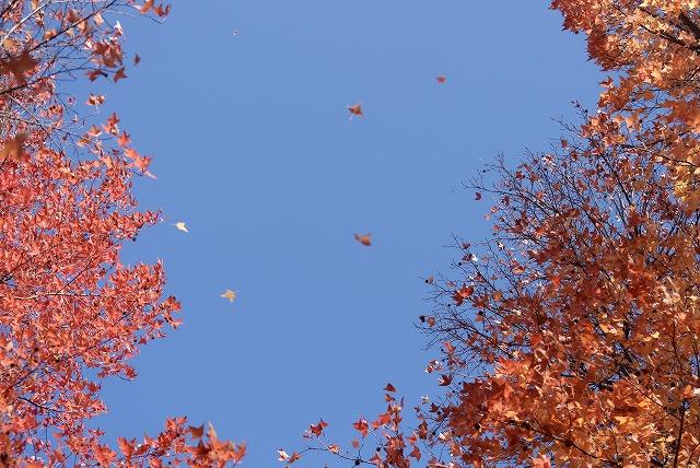 岡山総合グランドの紅葉13