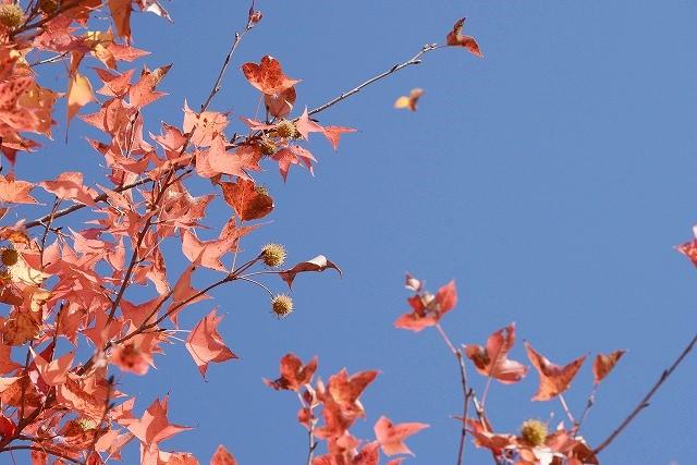 岡山総合グランドの紅葉14