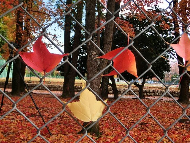 岡山総合グランドの紅葉19