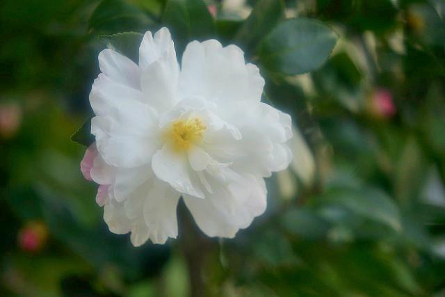 ハツヒカリ1