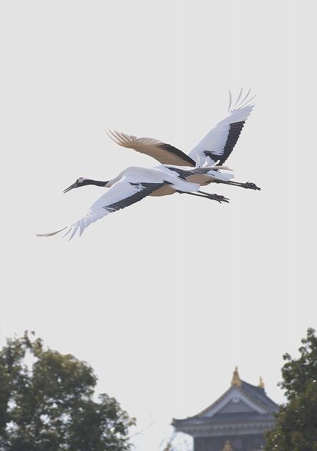 飛翔練習2