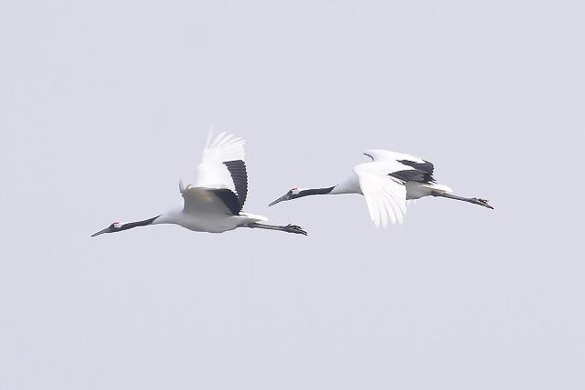 飛翔練習3