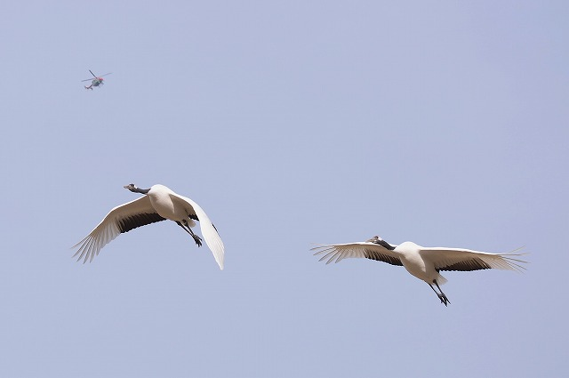 飛翔練習6