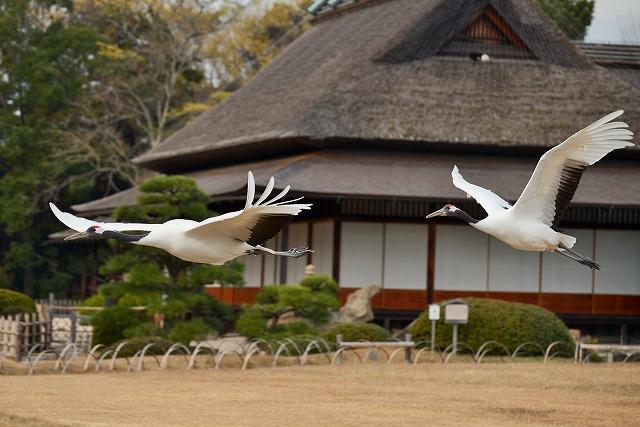 飛翔練習14