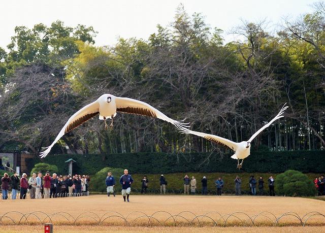 飛翔練習26