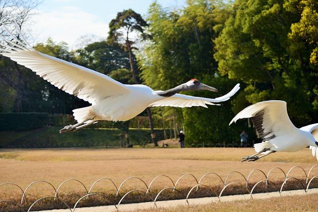飛翔練習31