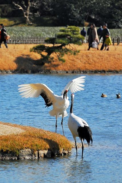 沢の池で遊ぶ2羽1
