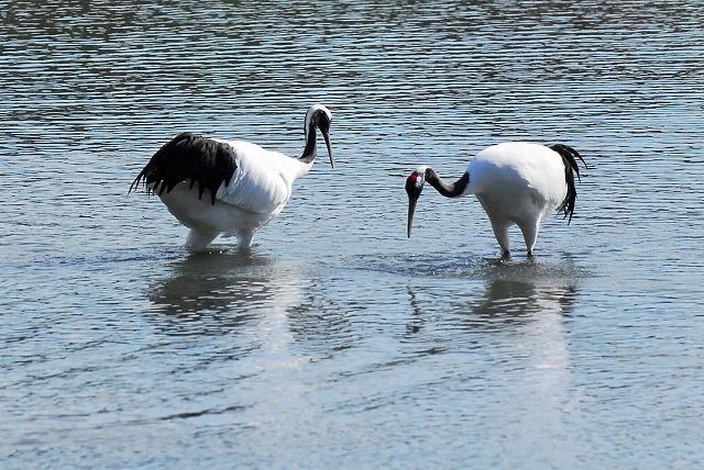 沢の池の中の2羽1