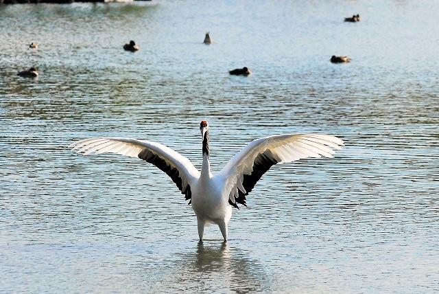沢の池の中の2羽2