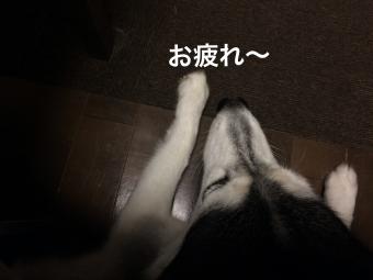 IMG_2227_Fotor.jpg