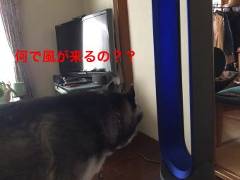 IMG_2252_Fotor.jpg