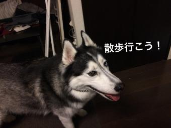 IMG_2257_Fotor.jpg