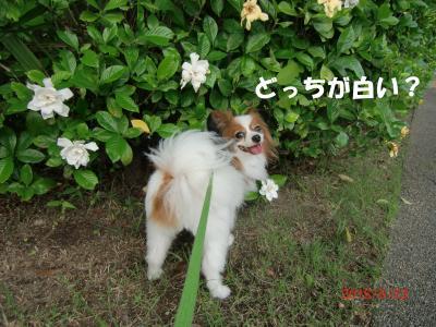 015_convert_20150625181425.jpg