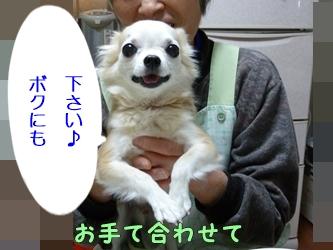 ブログ用P1030466-20140125-201016