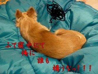 ブログ用P1030460-20140116-220646