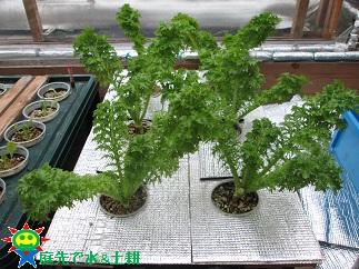 葉物野菜12・29