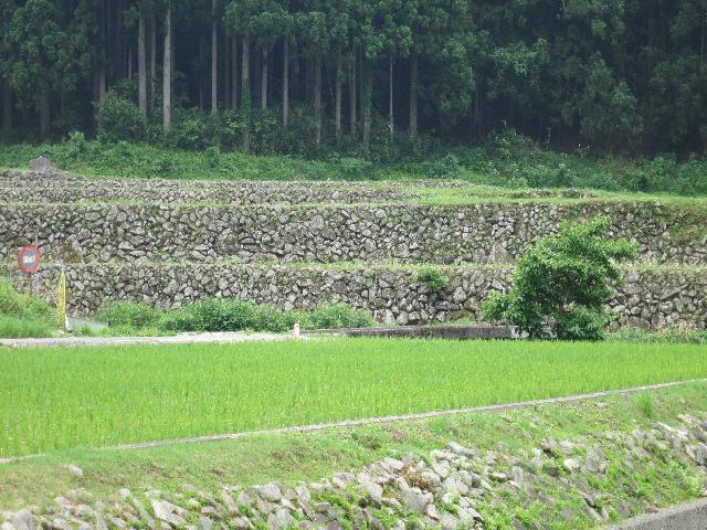 syoubu 030
