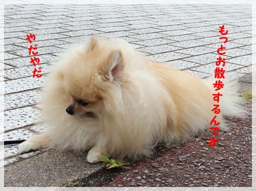 DPP_15070512.jpg