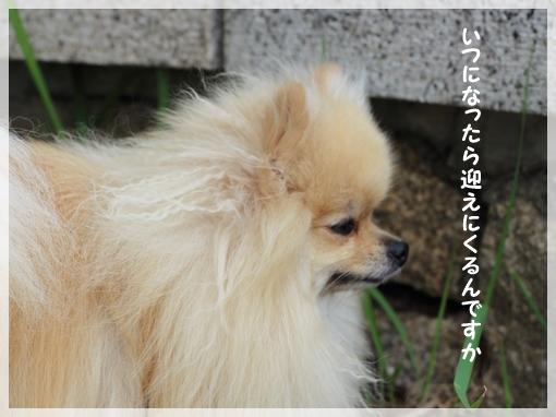 DPP_15070514.jpg