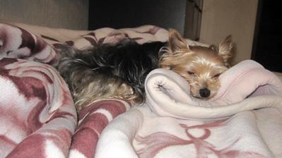毛布で寝る