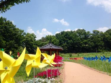 王陵公園にて。蓮の花と風車がとてもきれいでした^^
