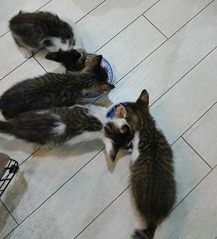 子猫4匹 (1)
