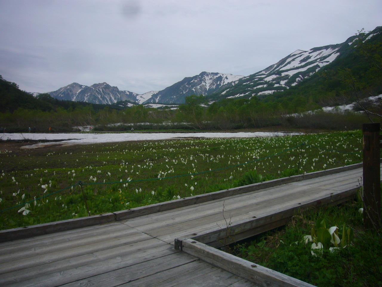 湿地帯より白馬岳、三俣蓮華 H27.6.30