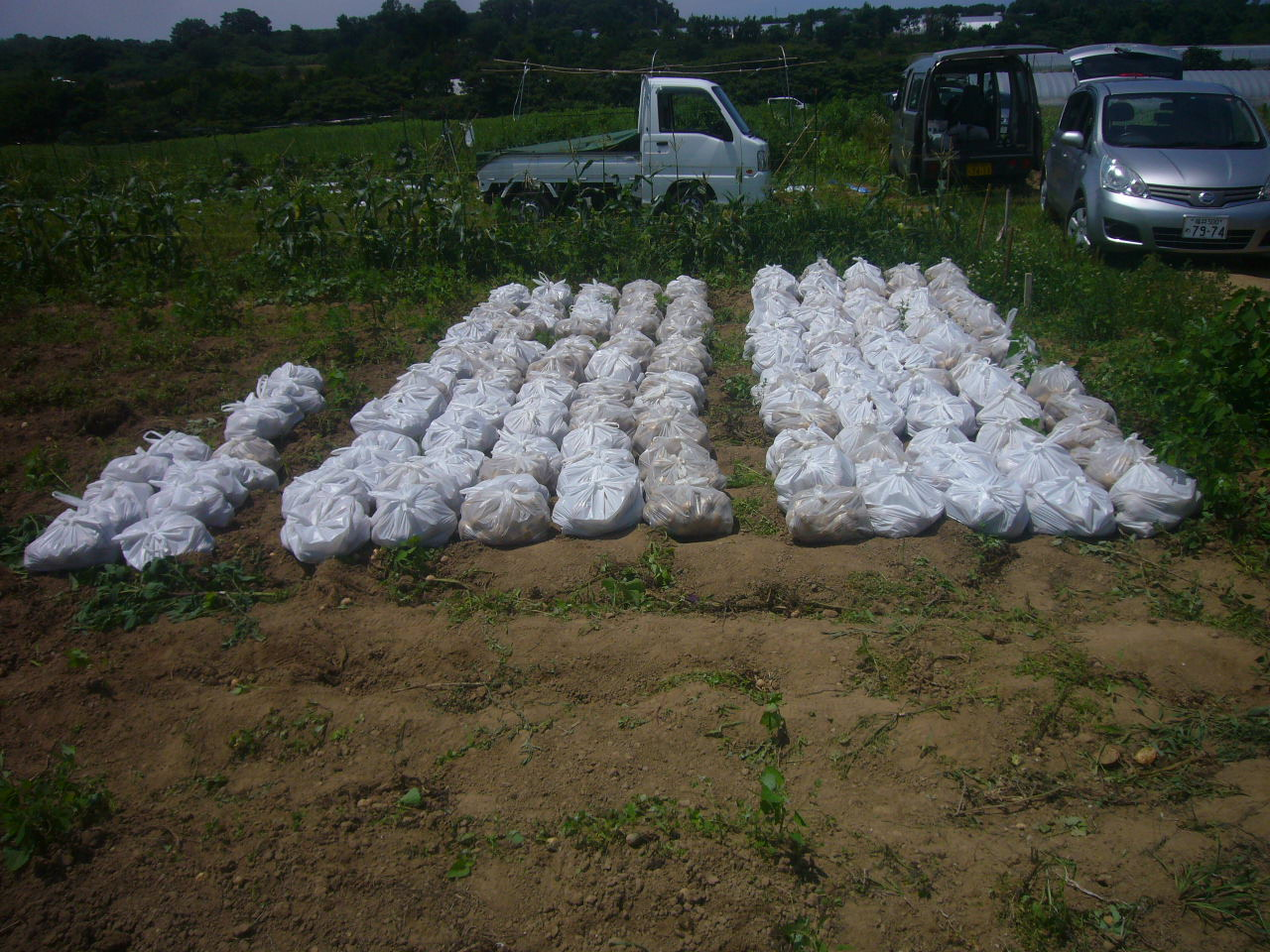 20人の半日労働の収穫 H27.7.11