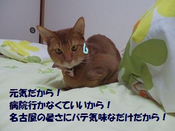 P6070641.jpg
