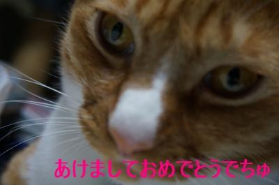 DSC04220_1.jpg