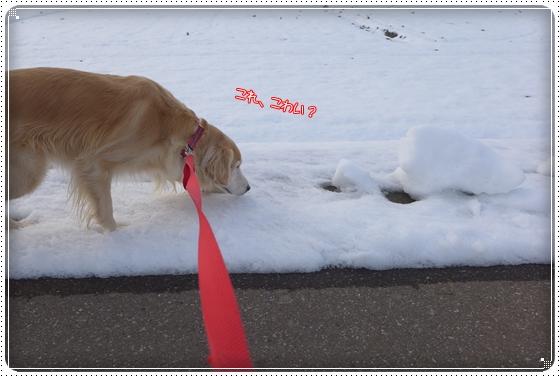2015,1,6お散歩3
