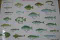 釣れる魚一覧表