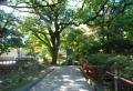 左が楷樹の木