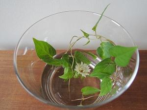 白い菊と蔦