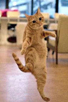 マイケルポーズ猫