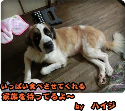 ハイジさっちゃん043